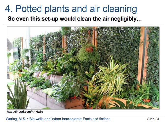 Польза от растений дома — не более чем расхожий миф 1