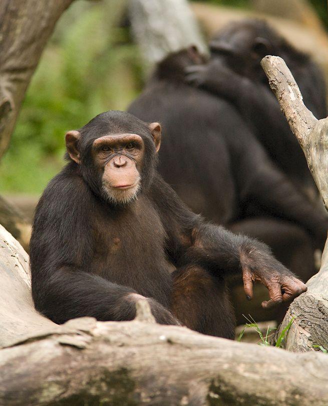 Самые умные животные мира 1