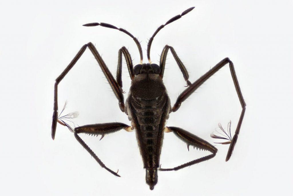 Как насекомые завоевали водное царство с помощью пары генов 1