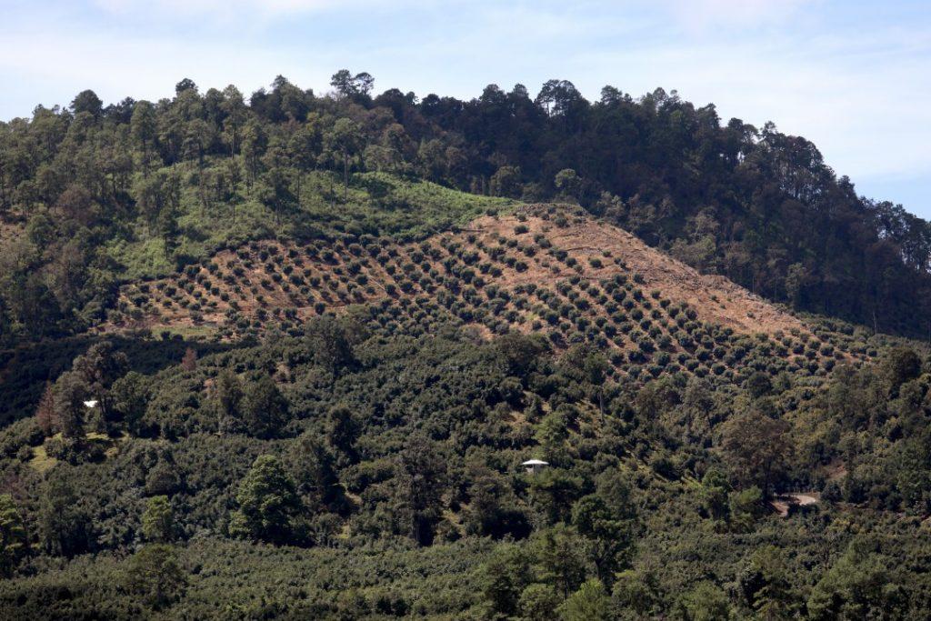 Война мексиканских картелей за контроль над оборотом... авокадо 1