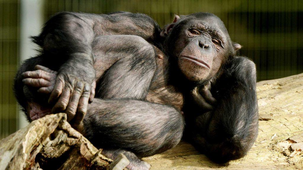 Главная ошибка эволюции? Возможно, это яички 2