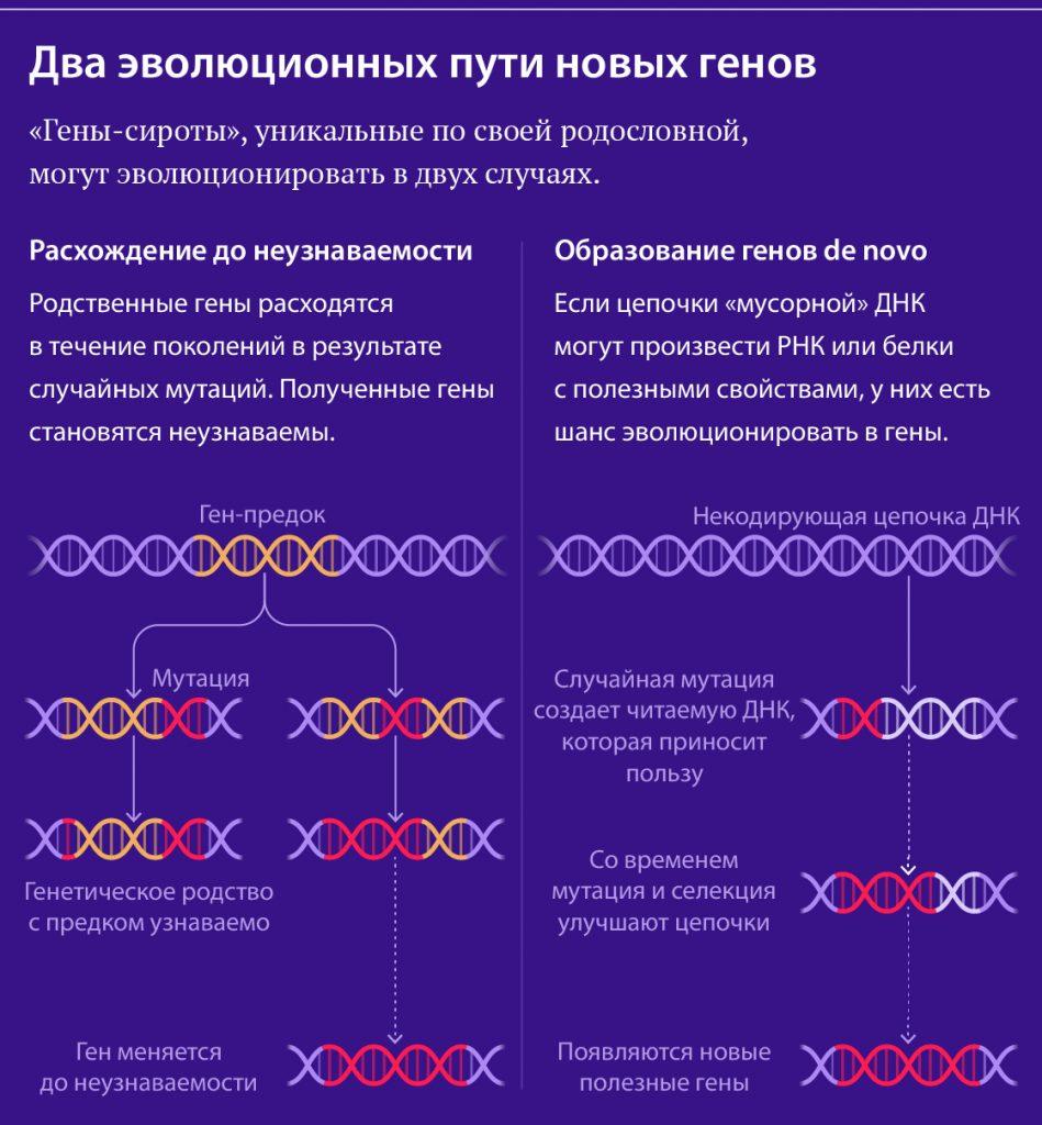 Откуда берутся новые гены? 2